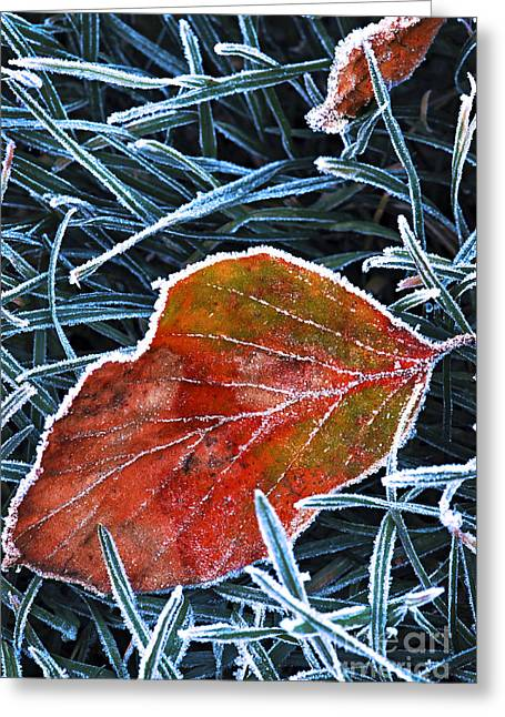 Coldness Greeting Cards - Frosty leaf Greeting Card by Elena Elisseeva