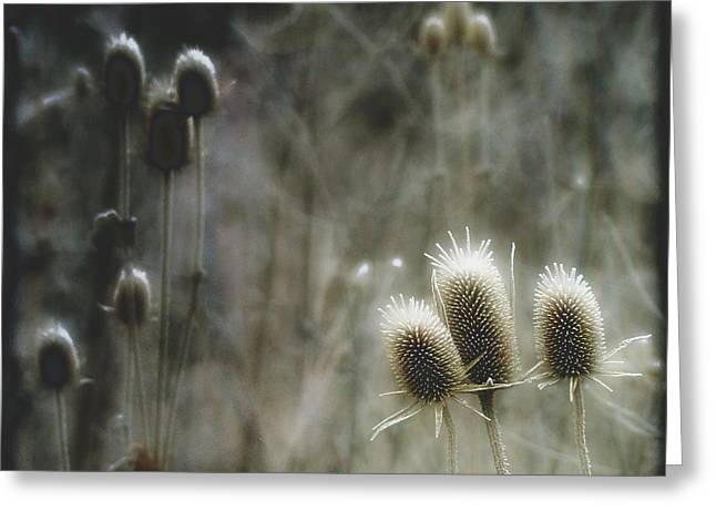 Frosty Tops Greeting Card by Gothicolors Donna Snyder