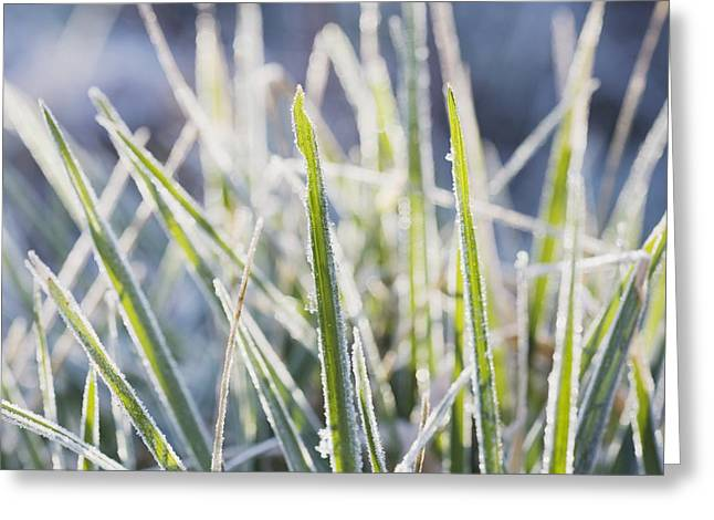 Ground Level Greeting Cards - Frozen Blades Of Grass Greeting Card by Craig Tuttle