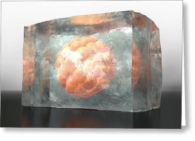 Embryo Greeting Cards - Frozen Embryo, Artwork Greeting Card by David Mack