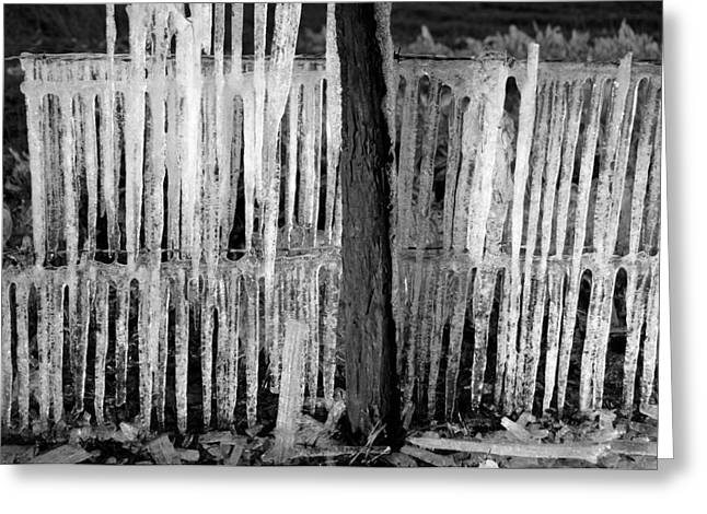 Barbed Wire Fences Greeting Cards - Frozen fence Greeting Card by David Lee Thompson