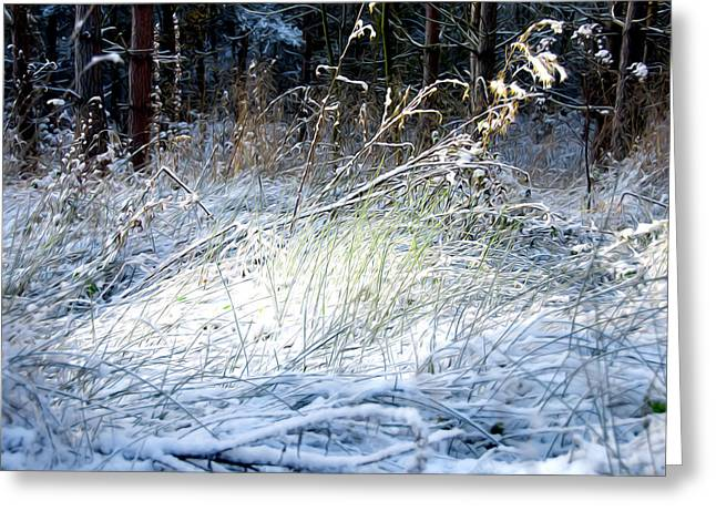Seaside Digital Art Greeting Cards - Frozen Grass Greeting Card by Svetlana Sewell