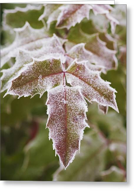 Ground Level Greeting Cards - Frozen Leaves Greeting Card by Craig Tuttle