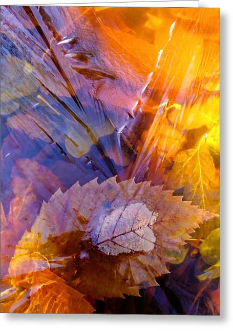 Farbenfroh Greeting Cards - Frozen Leaves ... Greeting Card by Juergen Weiss