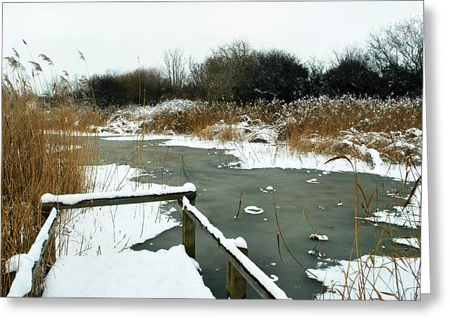 Snow Scene Landscape Greeting Cards - Frozen Marsh Greeting Card by Terence Davis
