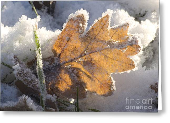 Scrart Greeting Cards - Frozen oak leaf Greeting Card by Steev Stamford