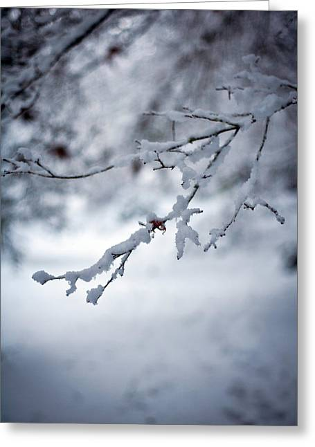 Frozen Path Greeting Card by Mike Reid