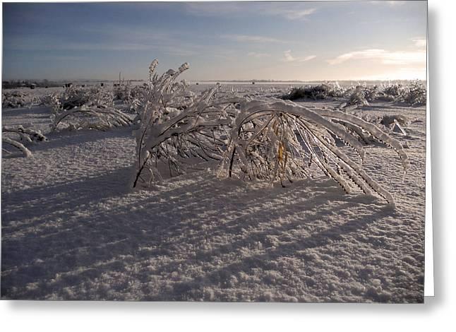 Frozen Riviere Des Mille Iles - Qc Greeting Card by Juergen Weiss