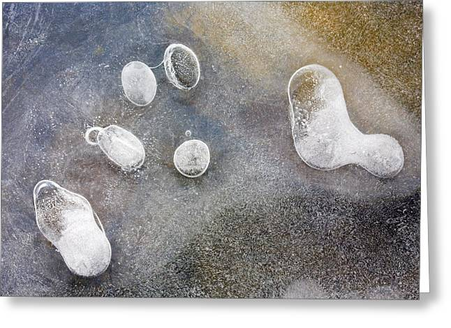 Bubble Greeting Cards - Frozen Symbiosis Greeting Card by Mike  Dawson