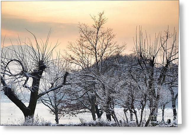 Frozen Trees Greeting Card by Mats Silvan