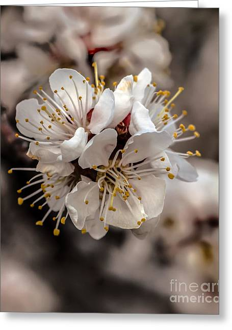 Prunus Persica Greeting Cards - Fruit Bouquet Greeting Card by Robert Bales