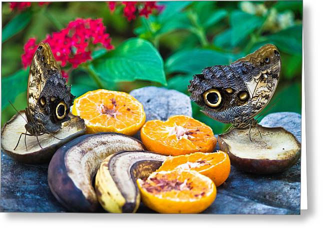 Butterflies Pyrography Greeting Cards - Fruit of life Greeting Card by Darren Langlois