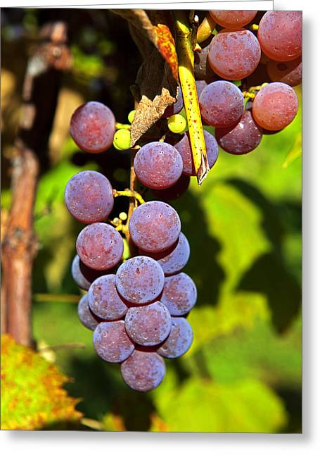 Grape Vine Greeting Cards - Fruit Of The Vine - Grapes Greeting Card by John Stephens