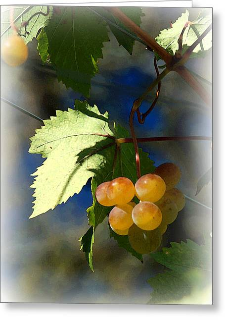 Grape Leaf Greeting Cards - Fruit of the Vine Vignetted Greeting Card by Suzanne Gaff