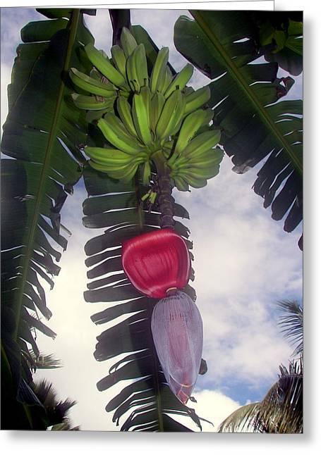 Fruit Tree Art Greeting Cards - Fruitful Beauty Greeting Card by Karen Wiles