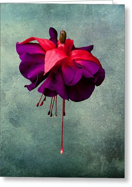 Purple Flora Greeting Cards - Fuchsia Greeting Card by Dawn OConnor