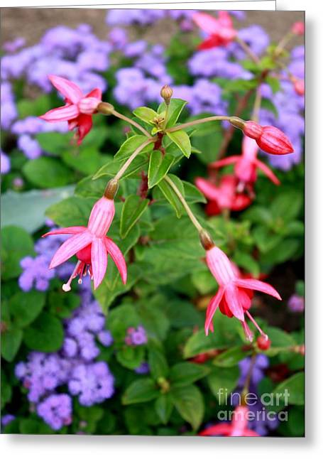 Pink And Purple Flowers Greeting Cards - Fuchsia Standout Greeting Card by Carol Groenen