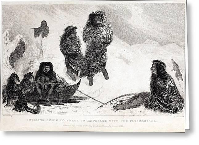 Beagle Artwork Greeting Cards - Fuegians From Darwins Beagle Voyage Greeting Card by Paul D Stewart