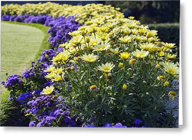 Flower Bed Greeting Cards - Full Bloom Greeting Card by Peter Chilelli