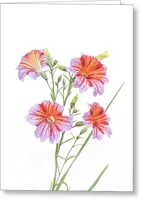 Tom And Pat Cory Greeting Cards - Full Bloom Greeting Card by Tom and Pat Cory