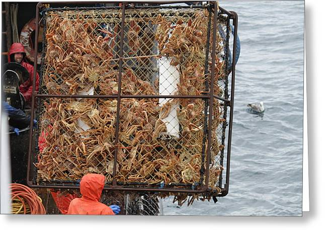 Recently Sold -  - Gnarly Greeting Cards - Full Crab Pot Greeting Card by Dean Gribble