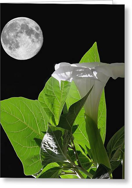 Night Angel Greeting Cards - Full Moon Flower Greeting Card by Angie Vogel