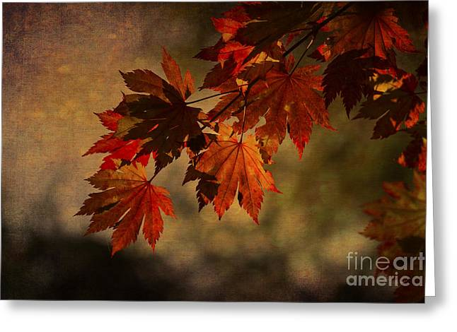 Bambers Greeting Cards - Full Moon Maple Greeting Card by Clare Bambers