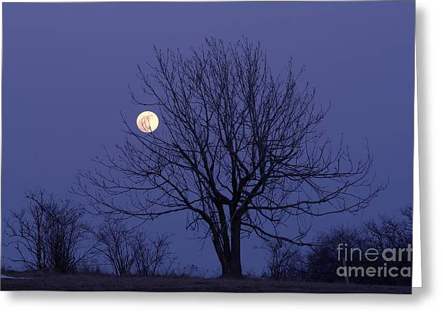 Lamdscape Greeting Cards - Full Moon Greeting Card by Michal Boubin