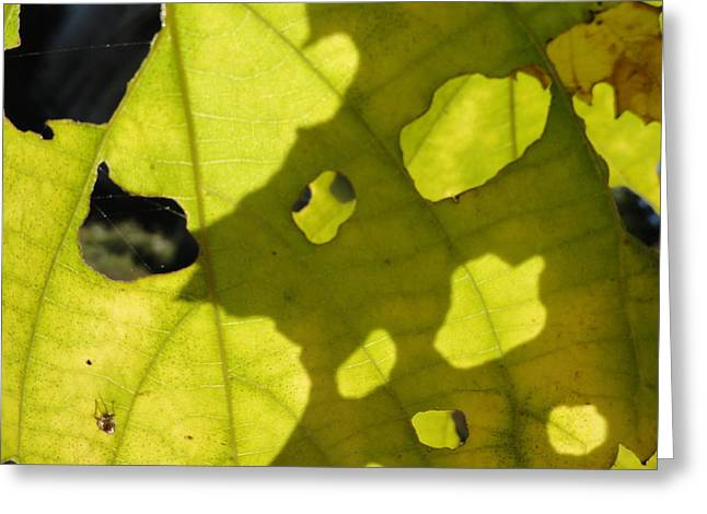 Cvnp Greeting Cards - Full Of Hollow Greeting Card by Trish Hale
