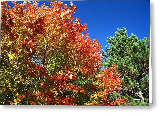 Fall Greeting Cards - Full Spectrum Greeting Card by Scott Hovind
