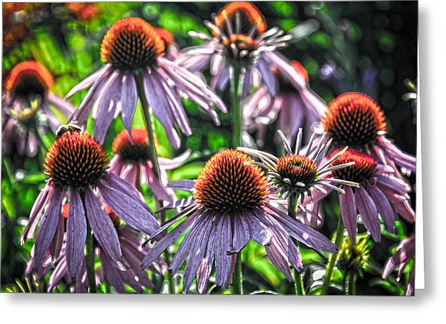 Abstracted Coneflowers Greeting Cards - Fun With Flowers Art Greeting Card by Steve McKinzie