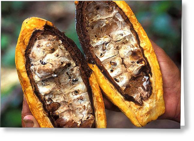 Fungal Infection Of Cacao Greeting Card by Science Source