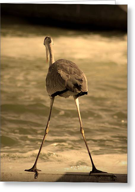 Peaceful Scenery Pyrography Greeting Cards - Funny Flamingo Greeting Card by Radoslav Nedelchev