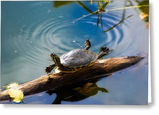Gainesville Greeting Cards - Funny Turtle Catching Some Rays Greeting Card by Rich Leighton
