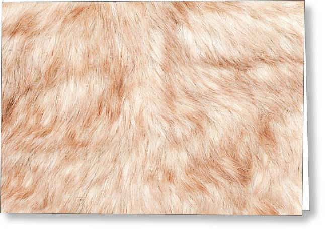 Beige Background Greeting Cards - Fur background Greeting Card by Tom Gowanlock