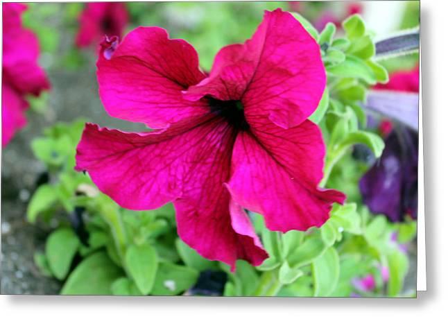 Fushia Greeting Cards - Fushia Flower Photo Greeting Card by Mille Kedlaw