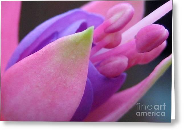 Fushia Greeting Cards - Fushia Flower Greeting Card by Susan Carella