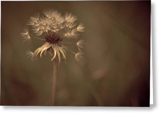 Dandilion Greeting Cards - Fuzzy Wuzzy Greeting Card by Trish Tritz