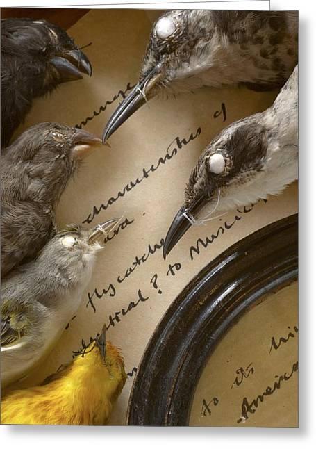 John Gould Greeting Cards - Galapagos Bird Specimens Darwin Research Greeting Card by Paul D Stewart