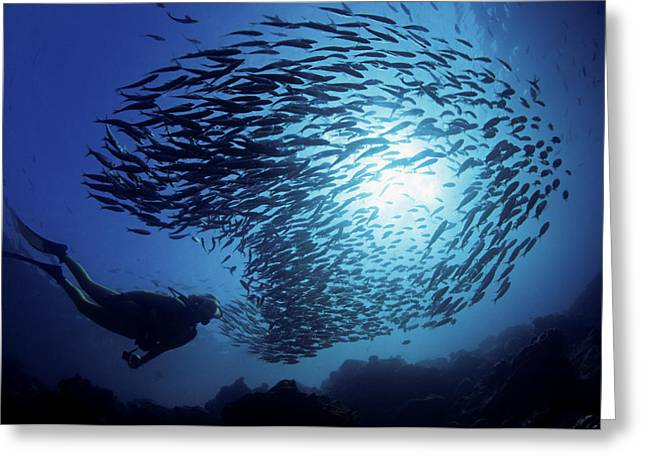 Snorkeling Photos Greeting Cards - Galapagos Islands Diver Greeting Card by Dave Fleetham - Printscapes