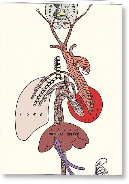 Vital Organ Greeting Cards - Galens Spirit System Greeting Card by Sheila Terry