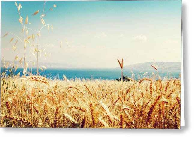 Sea Of Galilee Greeting Cards - Galilee Shores Greeting Card by Linde Townsend