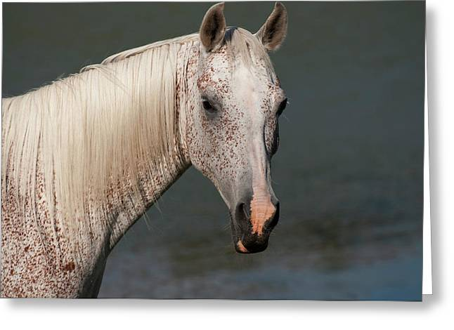 """animal Photographs"" Greeting Cards - Gandawa I Greeting Card by Michael Mogensen"