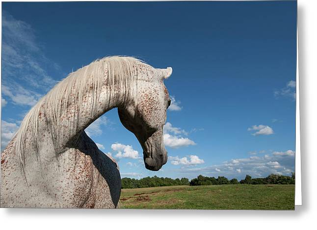 """animal Photographs"" Greeting Cards - Gandawa II Greeting Card by Michael Mogensen"
