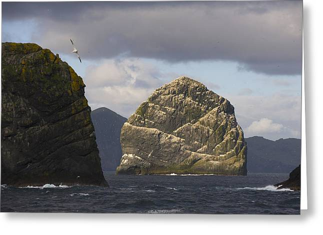 Outer Hebrides Greeting Cards - Gannet Bird Colonies On St. Kilda Greeting Card by Keenpress