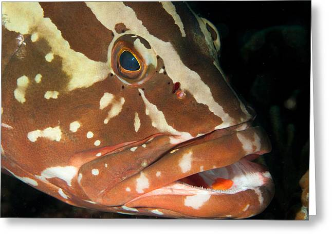 Jean Noren Greeting Cards - Gapping Grouper Greeting Card by Jean Noren