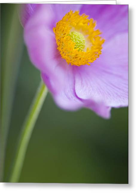 Decorativ Photographs Greeting Cards - Garden Beauty Greeting Card by Silke Magino