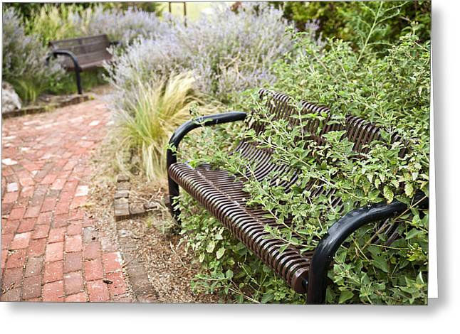 Floral Photos Greeting Cards - Garden Bench Greeting Card by Melany Sarafis