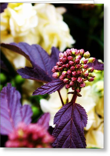 Oregon Flowers Greeting Cards - Garden Bouquet Greeting Card by Cathie Tyler