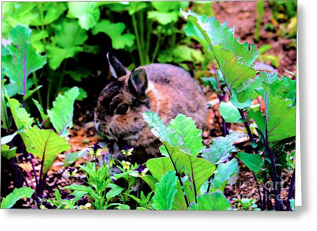 Bunny Greeting Cards - Garden Bunny Greeting Card by Nick Gustafson